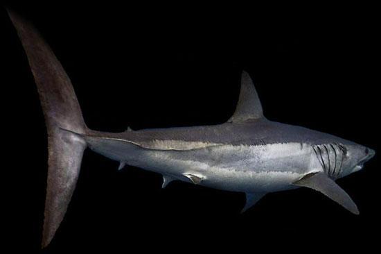 andere soorten haaien bij elkaar