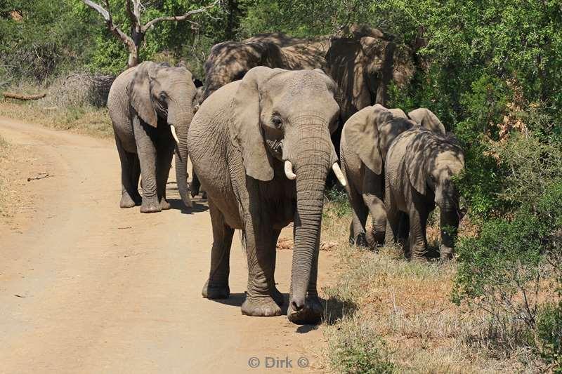 olifanten achtergronden bureaublad - photo #22